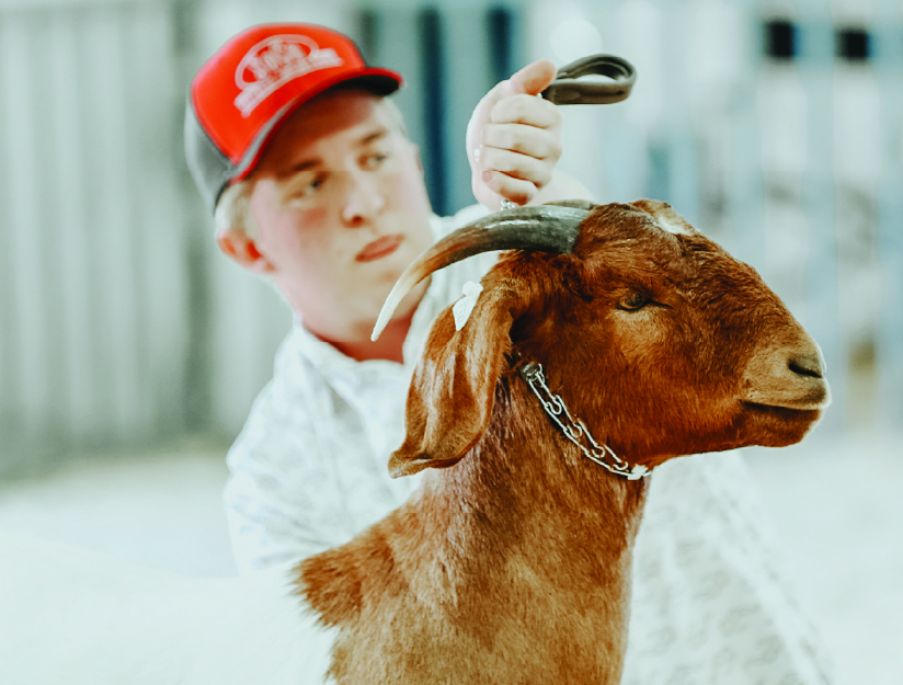 Agriculture competitor with a boer goat