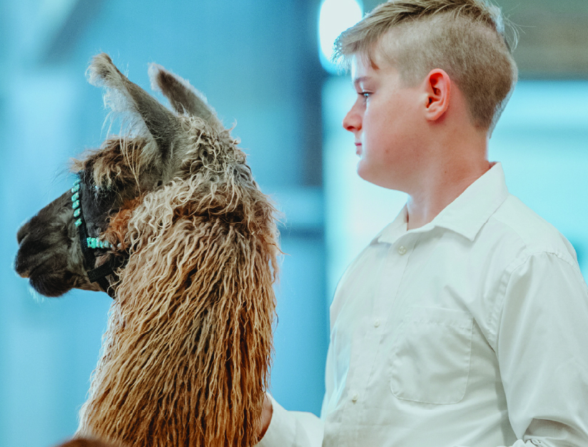 Agriculture competitor with a llama